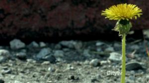 Fringe-S05E01